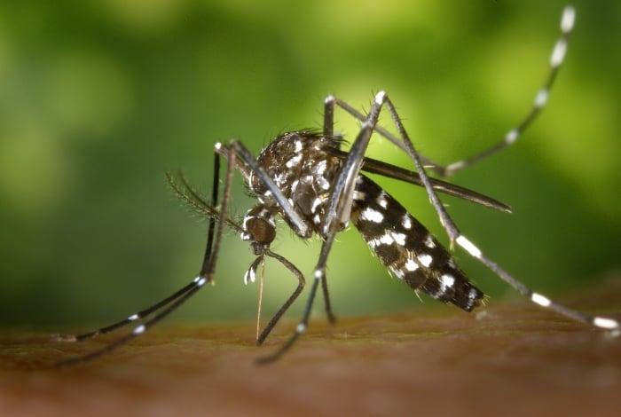 Com o verão chegando, Rio reforça campanha de combate à dengue