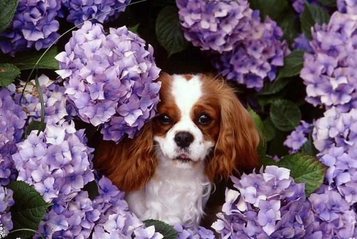 Primavera. Como cuidar do seu cão nessa estação
