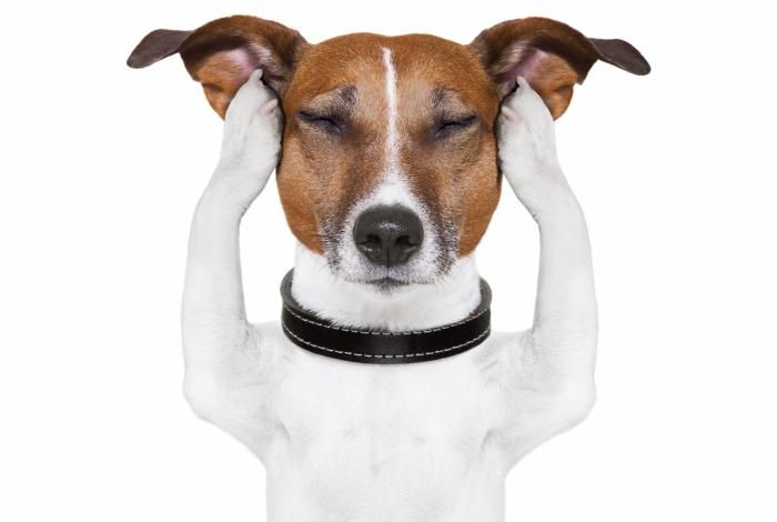 Réveillon. Pets morrem de medo do barulho de fogos de artifício
