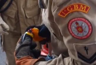 Tucano foi socorrido pelos bombeiros no Leme