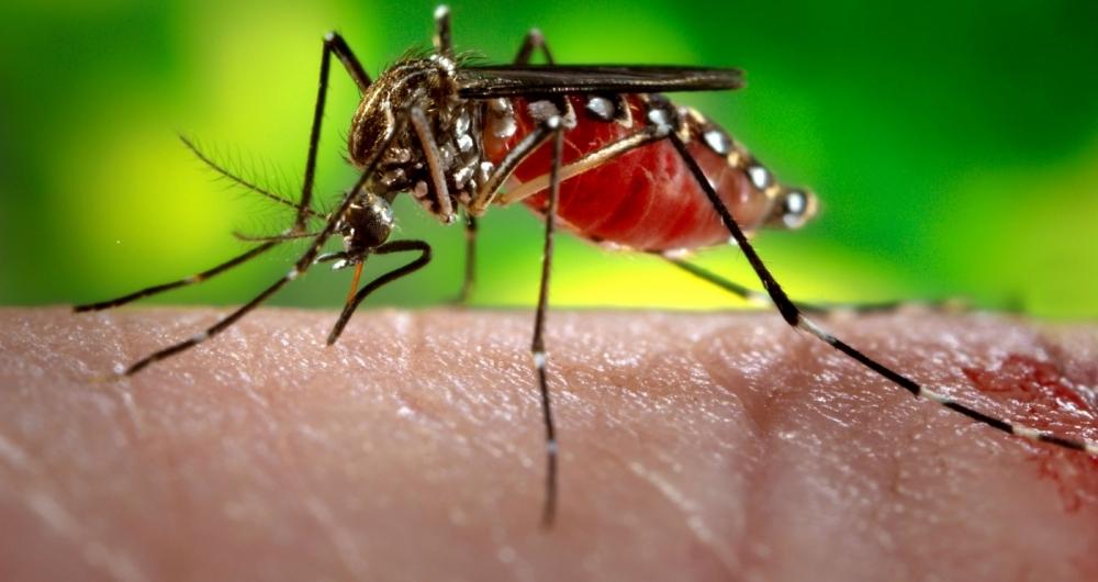 Dia D: cerca de 1,5 mil imunizados contra a febre amarela