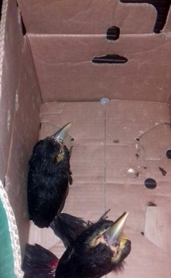 Aves silvestres são apreendidas na Washington Luiz