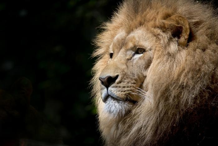 Ao todo, 628 mil contribuintes estão na mira do Leão