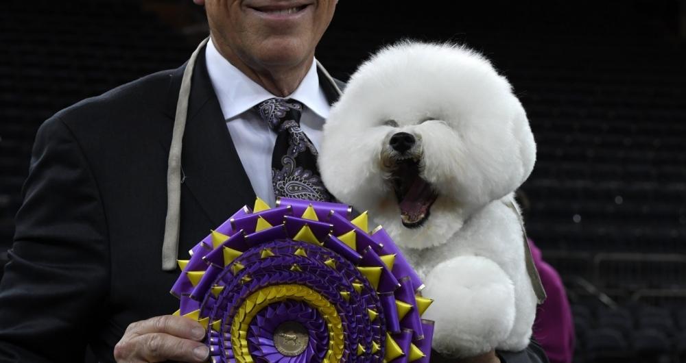 Flynn, este simp�tico bichon fris� (com o adestrador, Bill McFadden), parece rir ao ganhar o primeiro pr�mio de feira canina em Nova York