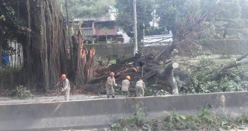 Queda de árvore deixa trânsito lento na Rodovia Niterói-Manilha na manhã desta terça-feira