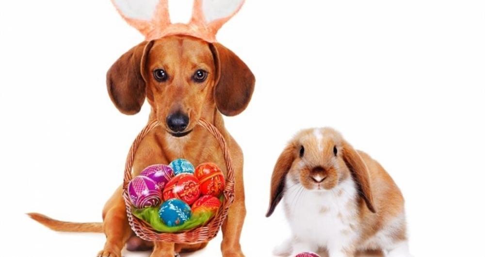 A P�scoa est� chegando mas chocolate � t�xico para os animais