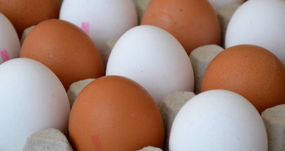 Ovos faz bem para a memória e saúde dos olhos