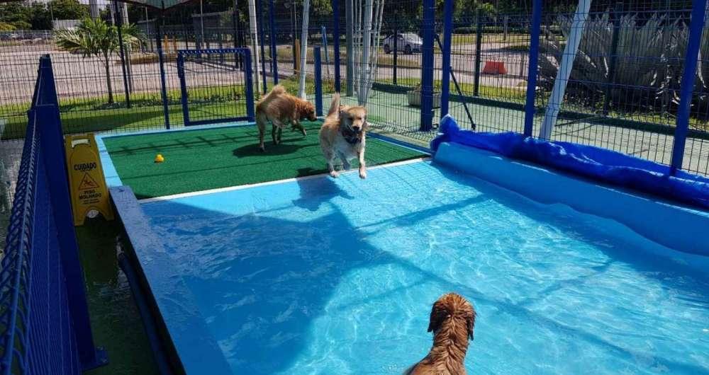 Barra ganha o maior parque para pets da regi�o, o The Dog Station Park
