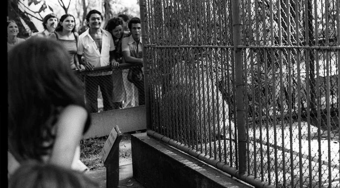 A foto foi feita  no Natal de 1976. No feriado de 25 de dezembro,  a visita ao Zool�gico do Rio,  na Quinta da Boa Vista, foi o programa  escolhido pelo grupo que, pelo que se v�, se divertiu:  basta observar os sorrisos � frente de uma  das jaulas dos animais.