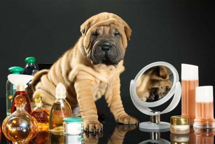 Perfume de humanos causa alergias aos pets