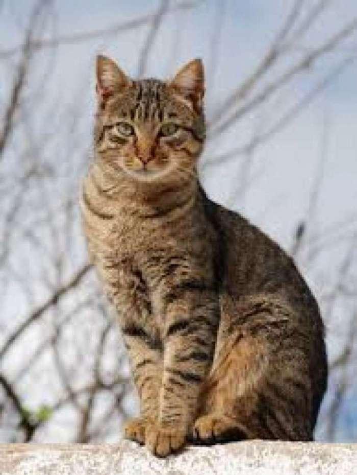 A rinotraque�te � comum em gatos no outono. H� vacina para a doen�a.