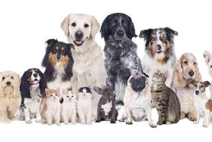 Projeto Ambiente Animal vai castrar de graça cães e gatos da região da Taquara