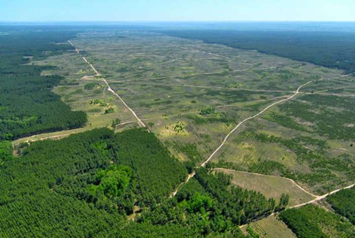 Segundo a organização, desmatamento subiu 39% de agosto do ano passado a julho deste ano