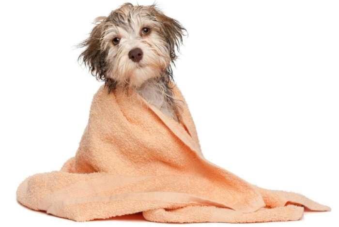 Use toalha e, se puder, secador de cabelo para garantir uma secagem completa