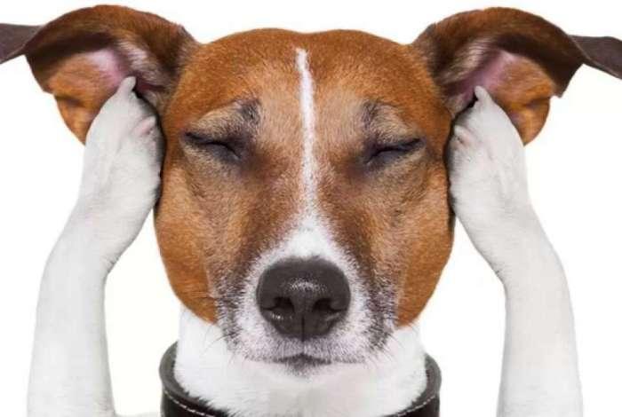Com audi��o muito sens�vel, pets sofrem com o barulho dos fogos de artif�cio
