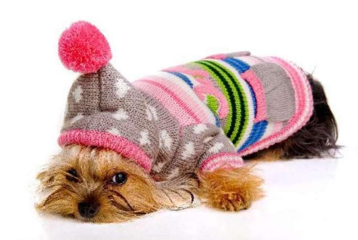 Pets podem usar roupinhas no inverno, mas é preciso ficar atento aos problemas de pele