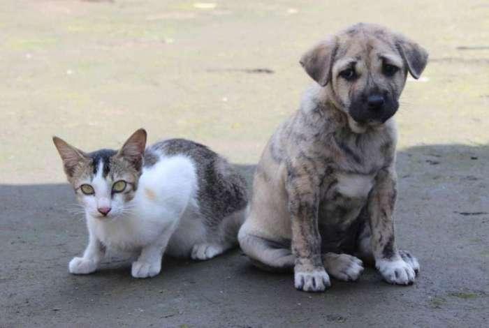 Sancionada lei que obriga estabelecimentos veterinários a denunciar maus-tratos a animais