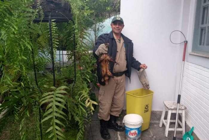 Gambá foi resgatado e levado para o Parque Marapendi