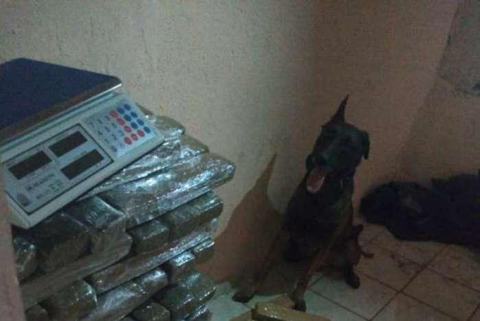 Drogas apreendidas pelo Batalhão de Ações com Cães