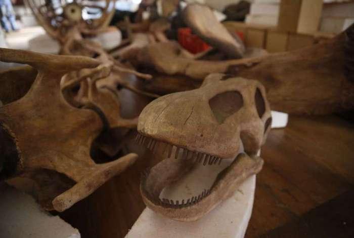 Museu Nacional reabre sala dos dinossauros no Rio