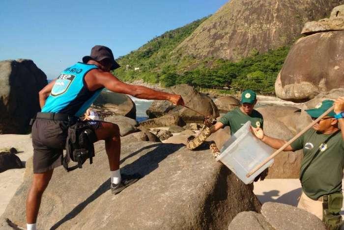 Patrulha Ambiental retirou duas jiboias, de cerca de dois metros, das pedras da Prainha, no Recreio. Denúncias são feitas pelo 1746 da prefeitura