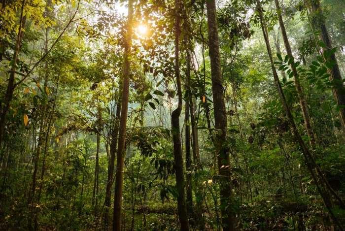 Animais da Amazônia possuem grande representatividade nos trópicos. Até aves que não são nativas desses países acabam migrando