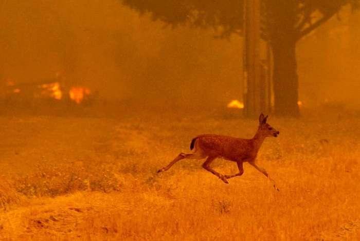 Incêndio é o mais letal e destrutivo já registrado na Califórnia