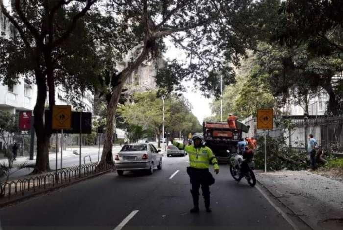 Queda de galhos na Rua Pinheiro Machado interdita uma faixa da via e causa retenções desde a saída do Túnel Santa Bárbara