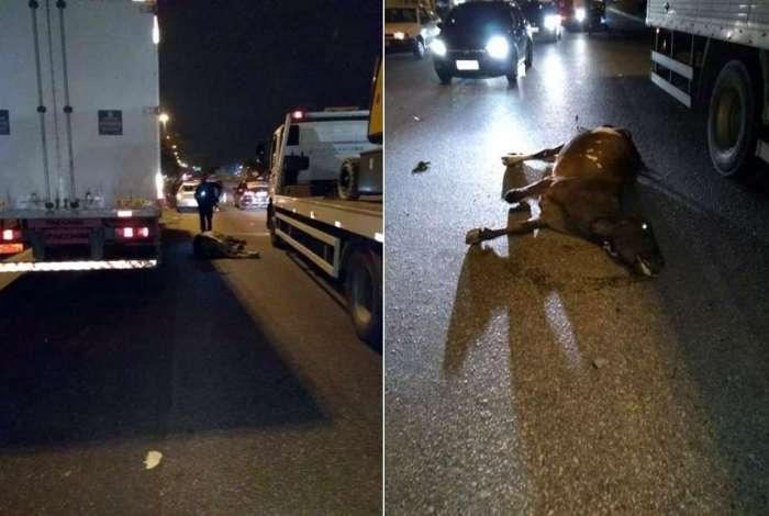 Animal foi atingido na pista sentido Zona Oeste da via expressa
