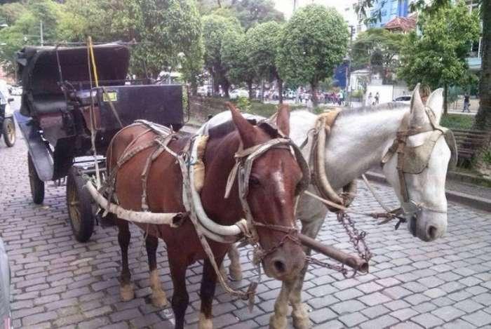 Plebiscito decidiu pela interrupção do serviço com tração animal
