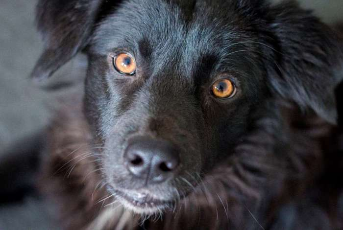 Projeto altera Código Estadual de Proteção aos Animais