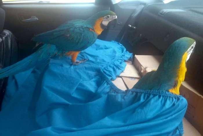 Homem foi preso com mais de 170 aves silvestres
