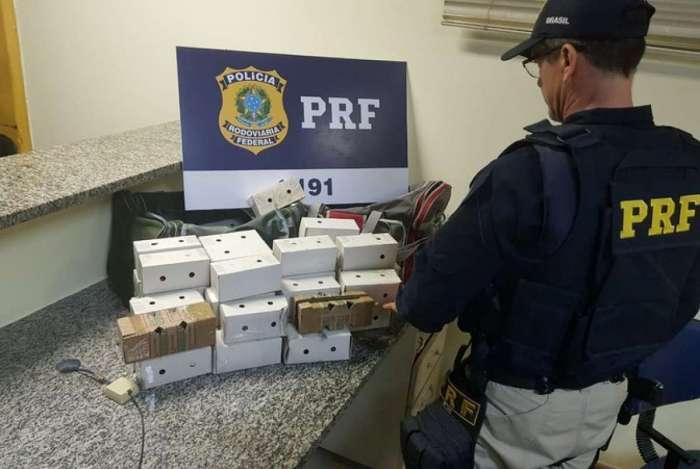 PRF apreende mais de 60 aves silvestres escondidas em carro na BR-116, em Itatiaia