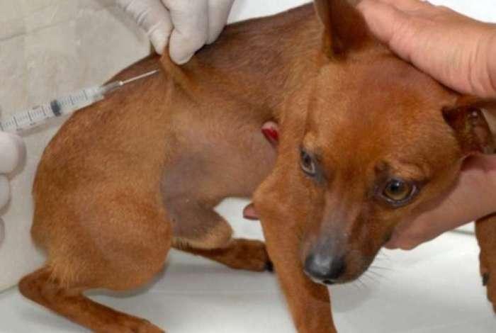 Animais devem receber a vacina antirrábica