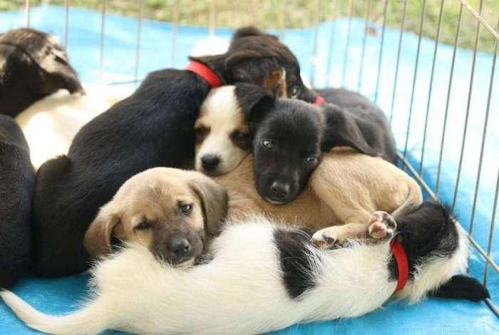 Brasil já conta com mais de 110 milhões de animais de estimação