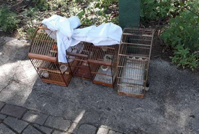 Ação recolheu 11 pássaros silvestres