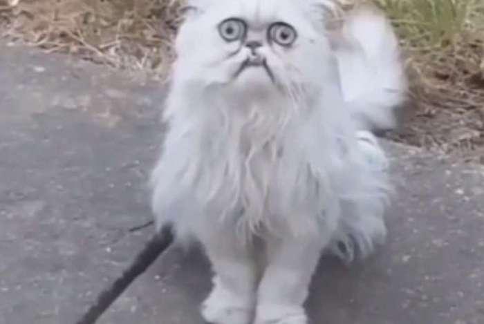 Com olhos esbugalhados e traços que lembram um desenho animado, o felino conquistou quase 90 mil seguidores no Instagram