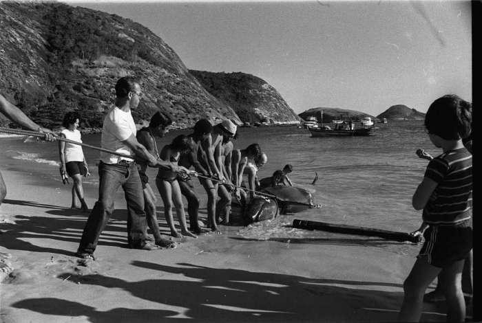 Filhote de baleia em Niterói
