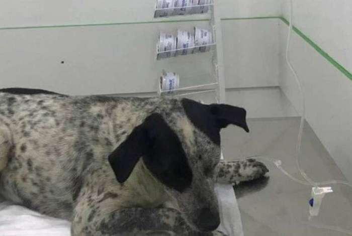 Cadela ficará internada por tempo indeterminado