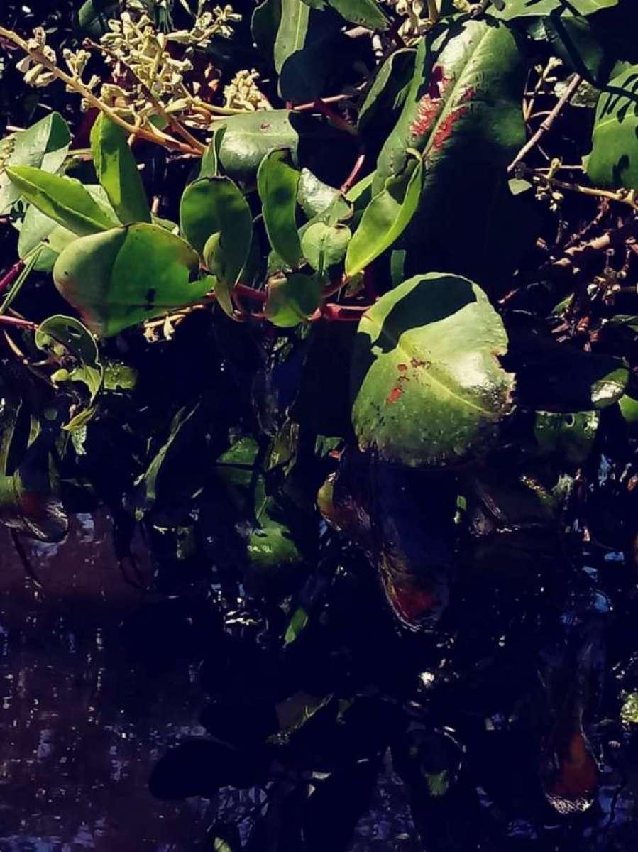 Vazamento Pelo Sensor Do óleo Fox Achado Com O Cel: Vazamento De óleo Em Magé Afetará Reprodução Da Fauna Em