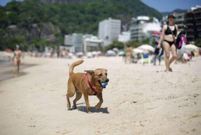 Presença de cães nas praias já era realidade e agora será regulamentada por lei municipal no Rio