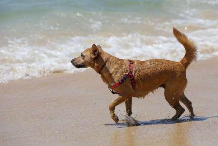 Dezenas de cães são afetados por doença misteriosa