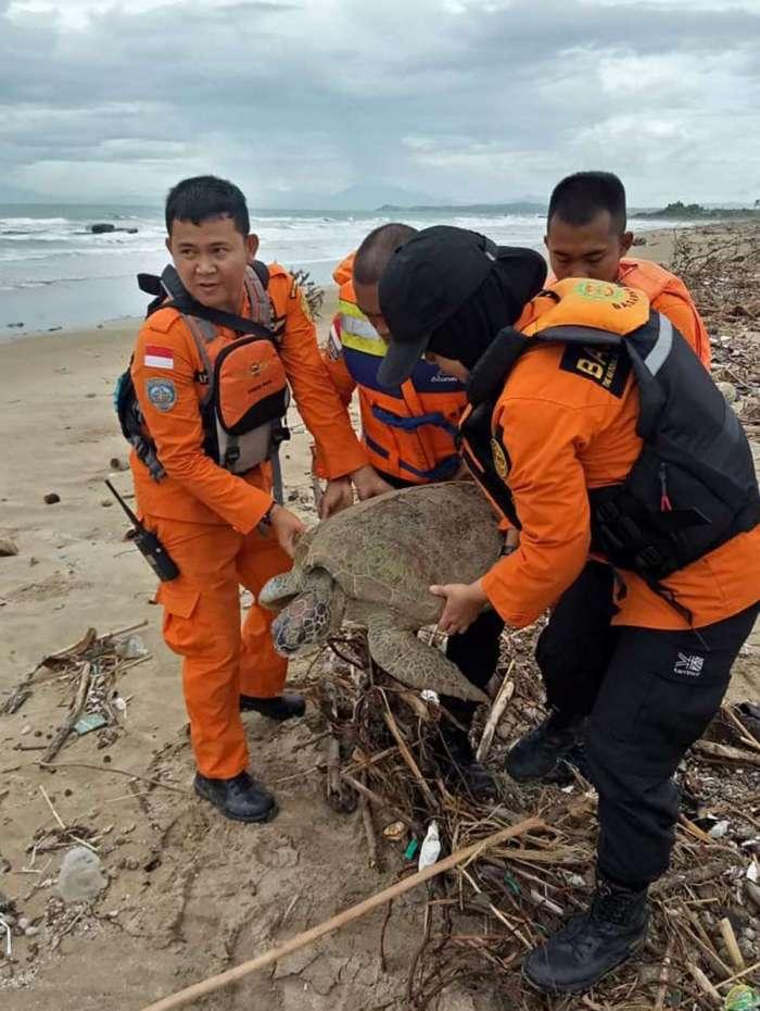 Espécies em extinção estão sendo resgatadas após o tsunami