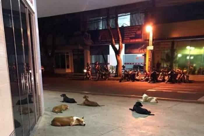 Cachorros aguardam na porta da Santa Casa até o tutor receber alta