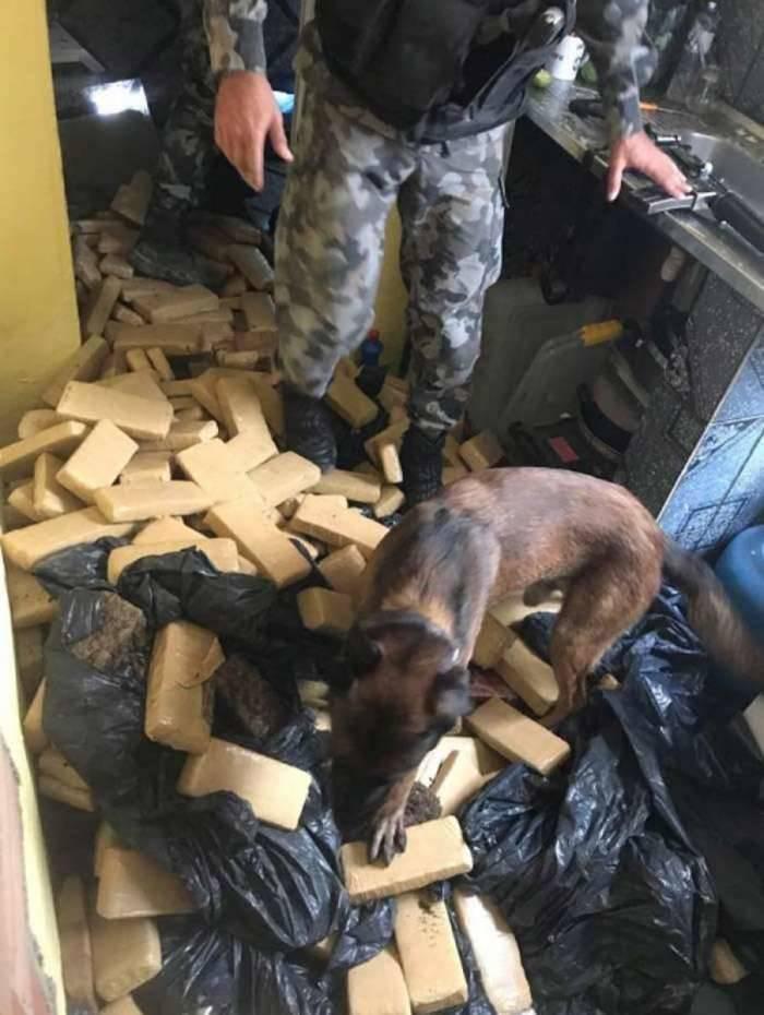 Cães farejadores localizaram 1 tonelada de maconha em Manguinhos