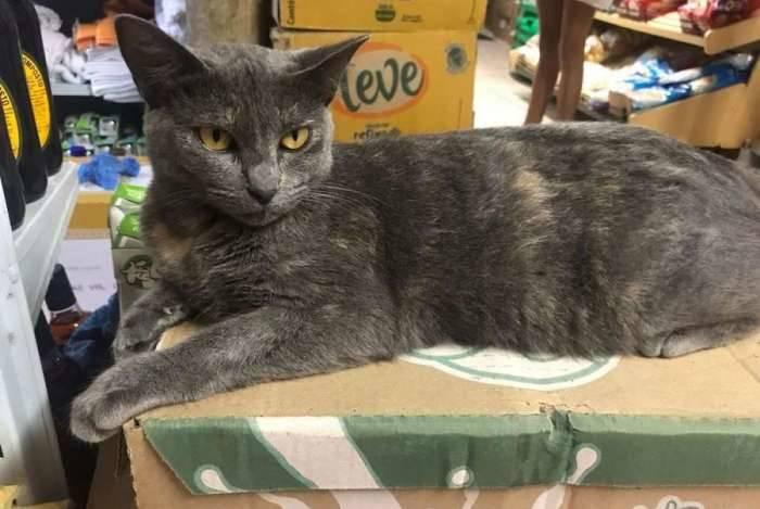 A gata Nina foi adotada pelos donos do mercado