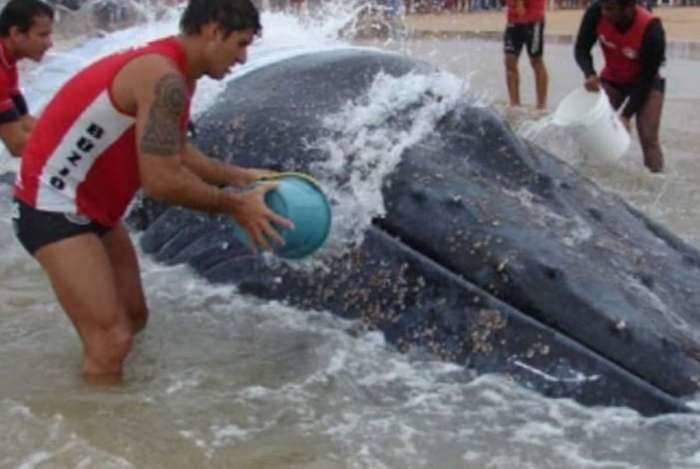Resgate de baleia Jubarte, em agosto de 2017, pela CBMERJ de Cabo Frio, está concorrendo a prêmio internacional.