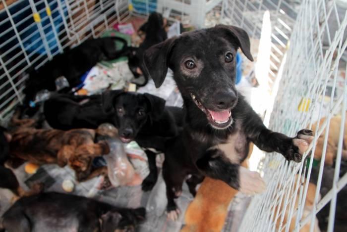 802edba27 Pelo menos 60 cães e gatos da ONG Amor aos Animais das Comunidades estão ...