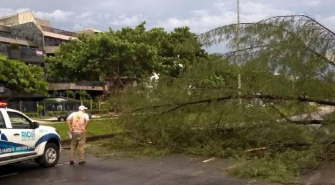 Avenida Lúcio Costa, na altura da Reserva, na Barra, fechada após queda de árvore