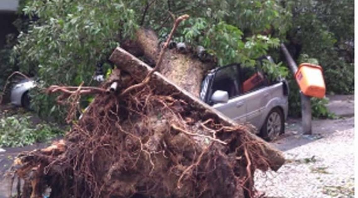 Árvore caiu na Rua Souza Lima, em Copacabana